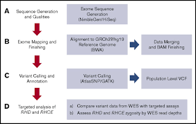 whole exome sequencing for rh genotyping and alloimmunization risk