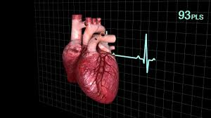3d Human Anatomy Human Heart Animated 3d Cgtrader