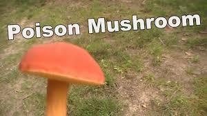 poison mushroom youtube