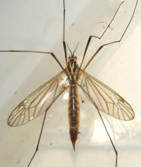 crane fly poison the best crane 2017