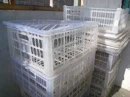 Jual Keranjang Container Plastik Bekas jual keranjang buah lengkeng kelengkeng keranjang cacing kontainer