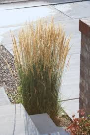 best 25 ornamental grass landscape ideas on
