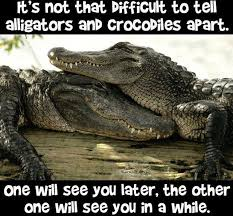 Alligator Meme - pull the trigger on twitter monday morning funnies see you