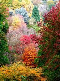 bellas imagenes otoñales todas las cosas bellas earth pinterest beautiful