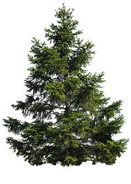 pine tree png by moonglowlilly on deviantart