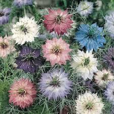 Flower Seeds Online - buy flower seeds flower seeds online india english vegetable
