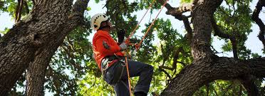 tree service removal company allentown bethlehem pa