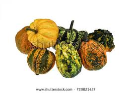 colorful ornamental pumpkins gourds isolated on stock photo