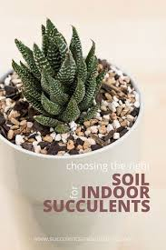 56 best succulents images on pinterest growing succulents