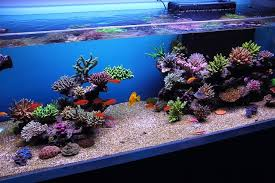 Saltwater Aquascaping April 23 2016 Professional Demo Reef Aquascaping Techniques By