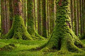 moss bio indicator to pollution says research