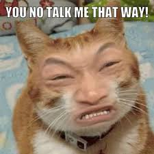 Angry Asian Meme - angry asian cat lolcats pinterest asian cat grumpy cat and