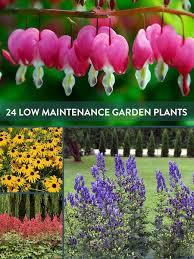 Green Thumb Landscape by Best 25 Low Maintenance Yard Ideas On Pinterest Low Maintenance