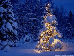 Christmas Trees 71 Best 1st Christmas Tree Images On Pinterest Christmas Time