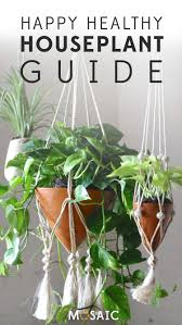 your guide to happy healthy houseplants