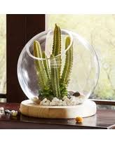 don u0027t miss this bargain laura ashley lifestyles lantern terrarium
