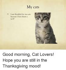 Good Morning Cat Meme - 25 best memes about good morning cats good morning cats memes