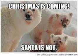 Funny Bear Meme - funny bear memes 100 images 15 funny spring memes to get you