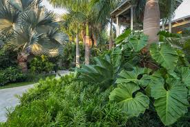 Tropical Looking Plants Design A Tropical Garden Hgtv