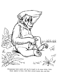 animal drawings coloring pages chimpanzees animal identification