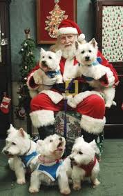 merry christmas baby westie puppy holiday dogs santa claus dog