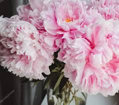 instagram pinkpeonies beauty bunch of pink peonies peony flowers in vase background
