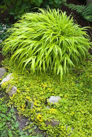 best 25 shade grass ideas on grow grass in shade