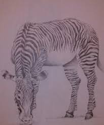 image detail for scratch art zebra hawaii dermatology pictures