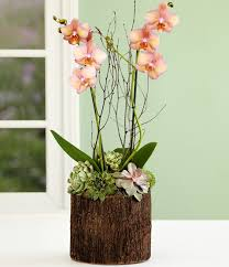 Orchid Plant 16 Best Orchid Plant Decor Images On Pinterest Plants