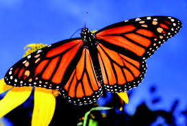 Monarch Design by Butterflies And Charleston Residential Landscape Design