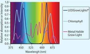 most efficient grow light led vs hid lights ledgrowlight hydro com