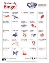 classroom activity biodiversity bingo teaching with pbs plum