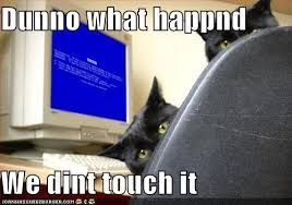 Funny Computer Meme - funny pictures cats computer blue screen death meme city