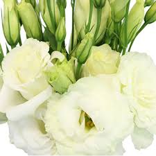 Lisianthus White Flower For June To September Delivery