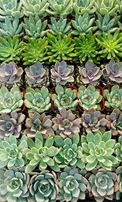 succulent wedding favors 128 beautiful succulent wedding favors by jiimz