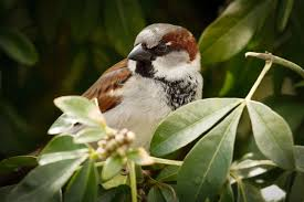 Cool Sparrow - cool sparrow hd picture amazingpict com wallpapers
