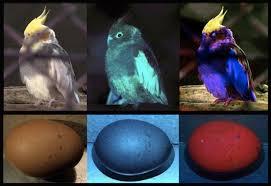 uv light for birds birds