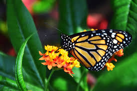 free picture beautiful bloom blossom bright butterfly animal