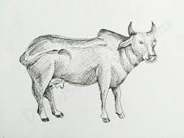 how to draw a cow in a few easy steps with pictures