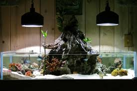 Aquascape Designs For Aquariums Holy I Need This Aquascaping U201coutside The Box U201d The Volcano