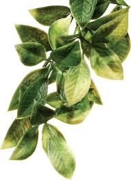 exo terra mandarin plastic plant large chewy com