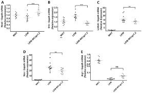 experimental crescentic glomerulonephritis a new bicongenic rat