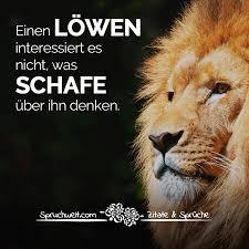 sprüche löwe löwen interessiert es nicht was schafe über ihn denken