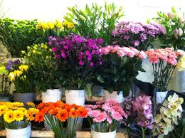 florists in blooms florist florists in scarborough florists in
