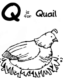 Q Is For Quail Coloring Page Color Luna Coloring Pages Q