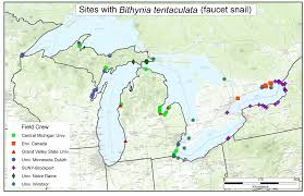 Coldwater Michigan Map by Gvsu Researchers Find More Of Invasive Snail Species In Lake