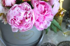 where to buy peonies peonies 101 everyone s favorite flower libby living colorfully