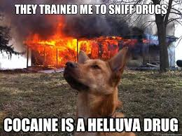 Drugs Are Bad Meme - 40 very funny drugs meme pictures and images of all the time