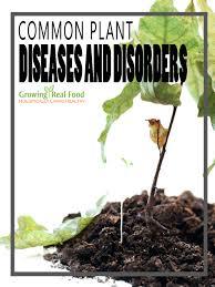 Common Plant Diseases - common plant diseases and disorders