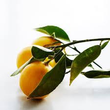 what is a meyer lemon williams sonoma taste